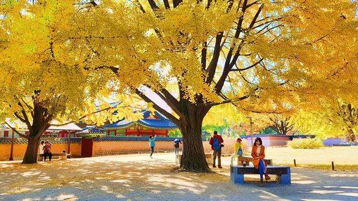 Trải nghiệm mùa lá đỏ Hàn Quốc tại cung điện Gyeongbokgung đẹp thơ mộng